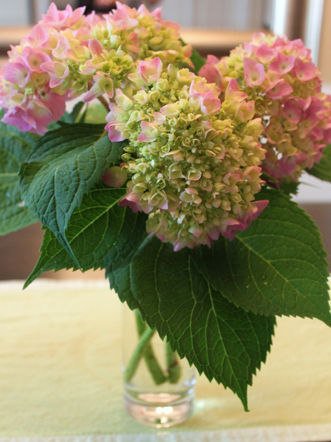 Three stems of hydrangea in a plain cylindrical drinking glass offer variety enough, with their spade-shaped glossy leaves and mix of pink, cream and unopened green blossoms