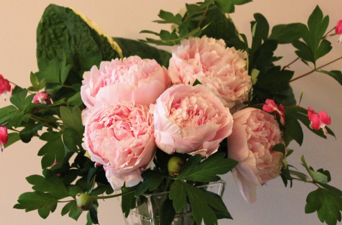 Peonies making a big statement